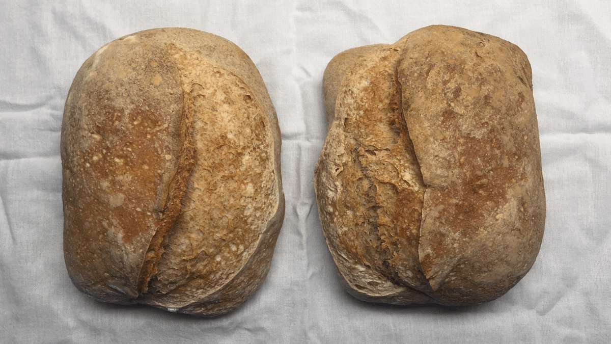 Two loaves both with good ears, the one on the right badly scored because left-handed